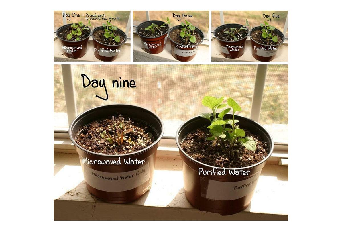 Divi augi: viens beigts, otrs - dzīvs