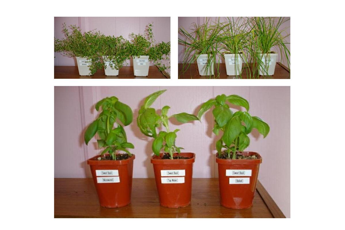 Divi augi: abi dzīvi